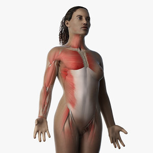 3D model skin african female skeleton