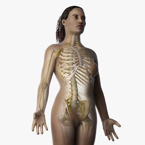 3D skin african female skeleton