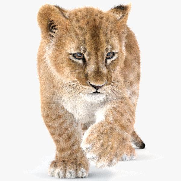 3D rigged baby lion fur model