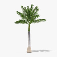 3D roystonea regia palm