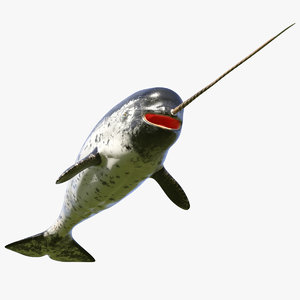 3D narwhal toothed whale model