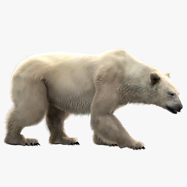 3D polar bear rigged model