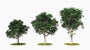 3D tree wind animation