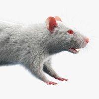 Rat (Fur)