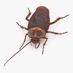 cockroach cleans mustache bug 3D model