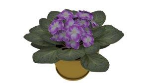 3D violet