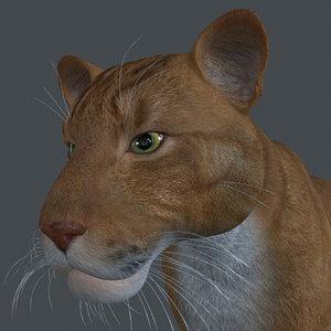 3D animal lion model