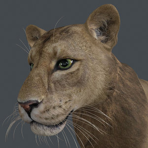 3D animal lion mammal
