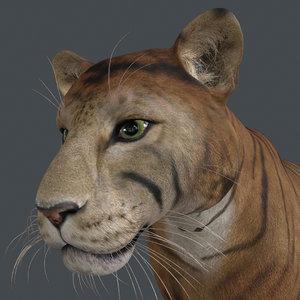 3D model animal lion mammal
