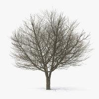 white ash winter 3D model