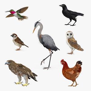 3D birds 2 model
