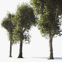 Pollarded Plane Trees
