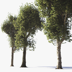 3D pollarded plane trees model
