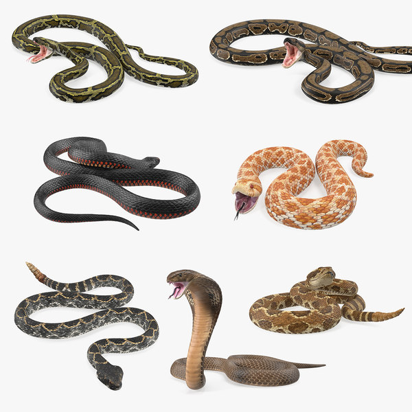 3D model rigged snakes 5