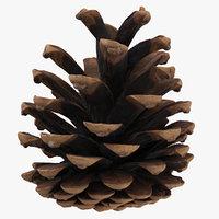 pine cone 01 model