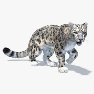 3D snow leopard animation model