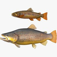 brown trout set normal and large size