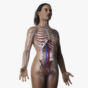 3D skin african female skeleton model