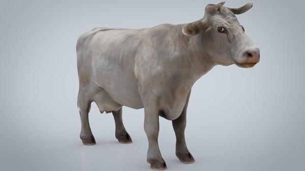 white cow 3D