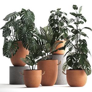 3D model monstera plants exotic