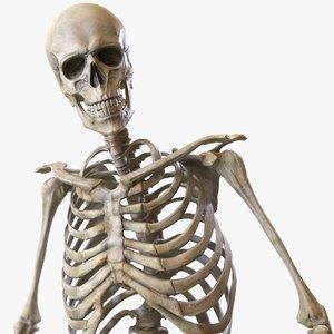 rigged skeleton model