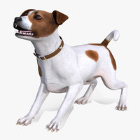 3D spotted jack russell terrier