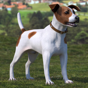 spotted jack russell terrier model