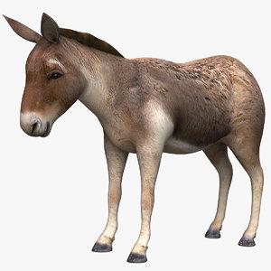 donkey beast horse model