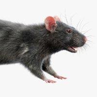 Rat (Fur) (3)