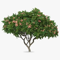3D plumeria frangipani tree pink