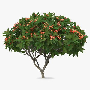 3D model plumeria frangipani tree red flowers