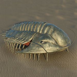3D trilobite extinct marine arachnomorph