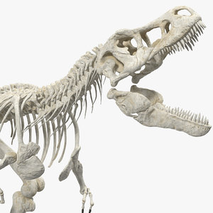 tyrannosaurus rex skeleton dinosaur 3D model
