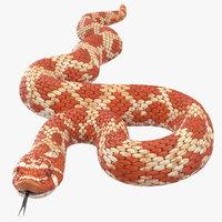 3D coiled red hognose snake model