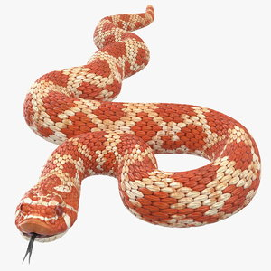 3D coiled red hognose snake model