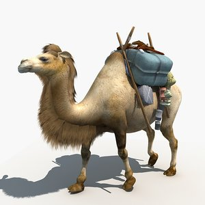 camel dromedary animals 3D model