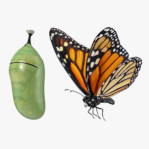 monarch butterfly cocoon flying 3D model
