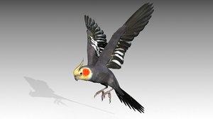 3D model parrot bird