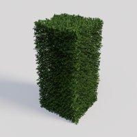 3D ligustrum ovalifolium plant gardens model