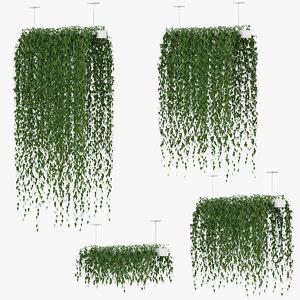 plants hanging 3D