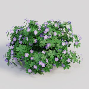 geranium gardens plants 3D model