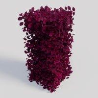 fagus sylvatica atropunicea 3D model