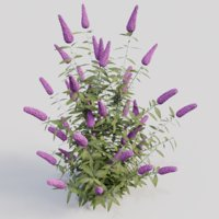 3D model buddleja davidii purple gardens
