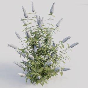 buddleja davidii white gardens 3D
