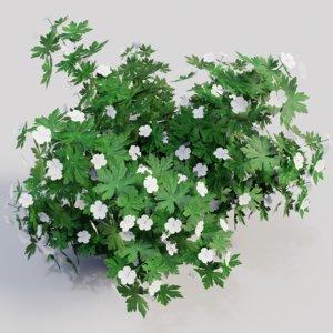 3D geranium white