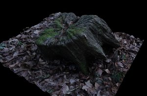 old tree stump 3D