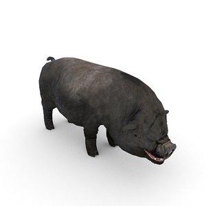 pot-bellied vietnamese vietnam pig model