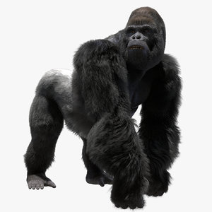 mountain gorilla rigged 3D model