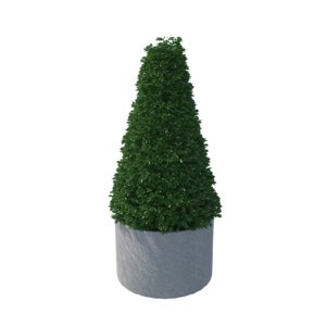 buxus pyramid plant pot 3D