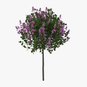 3D korean lilac model